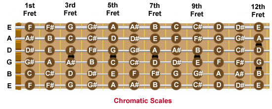 Guitar fretboard showing every note on each string in the first 12 frets